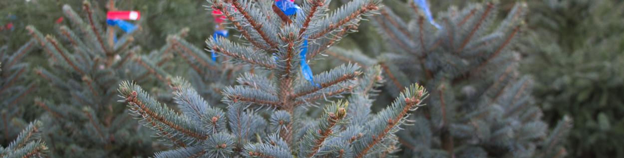 Weihnachtsbaum-03