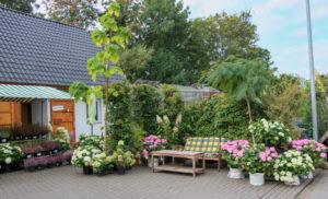 Lounge mit Hortensien