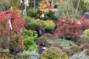 Herbst und seine Farben