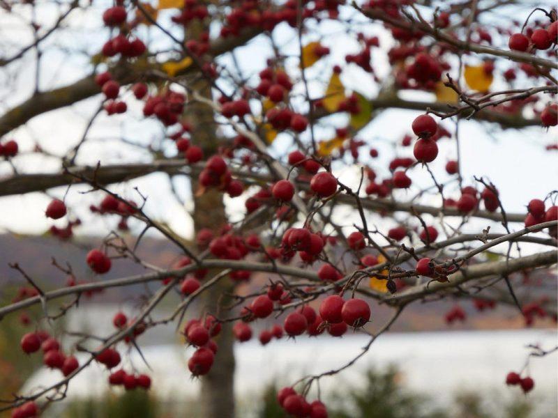 Herbstplfanze-02